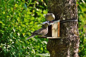 animal aviary bird house 162943 e1535983921297