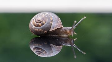 Vignette escargot ralentir